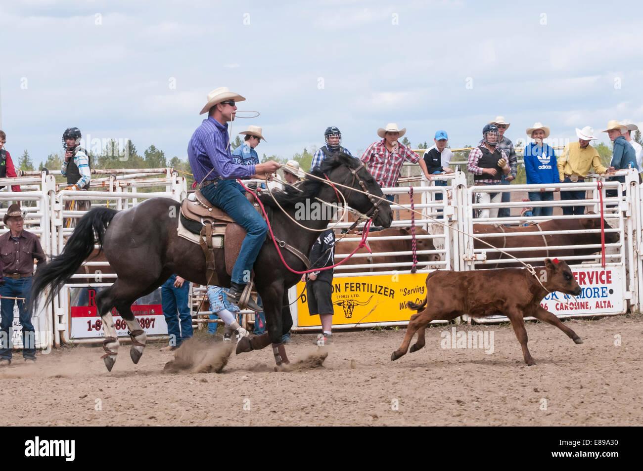 Cowboy Lasso Calf Stock Photos Amp Cowboy Lasso Calf Stock