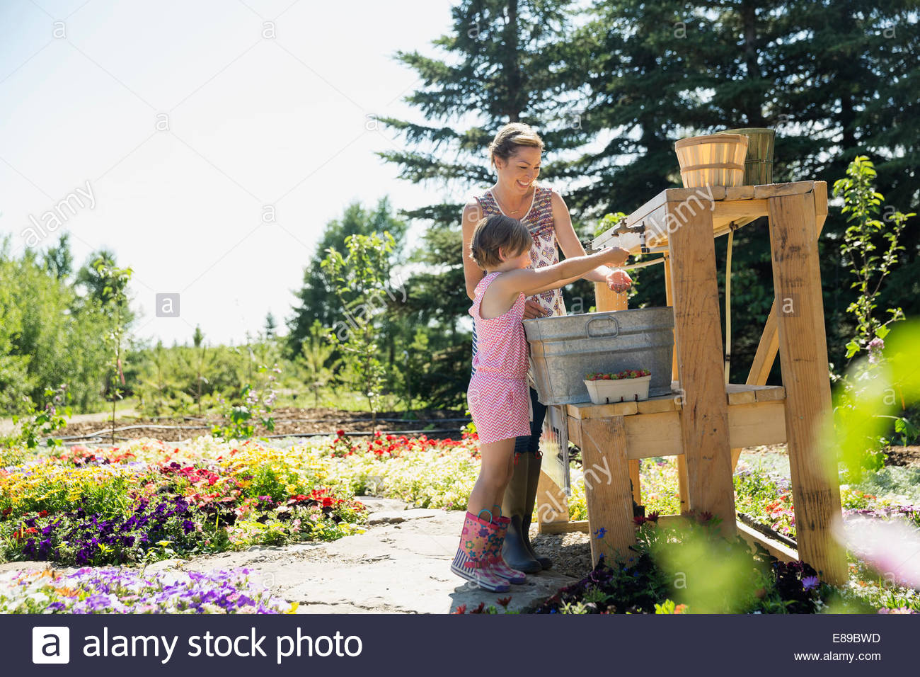 Mother and daughter rinsing fresh picked berries - Stock Image