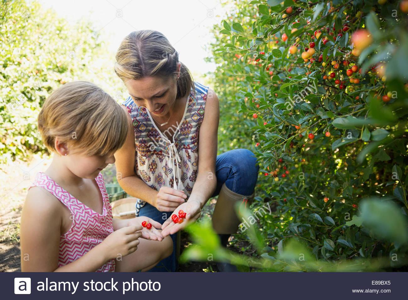 Mother and daughter picking currants in garden - Stock Image