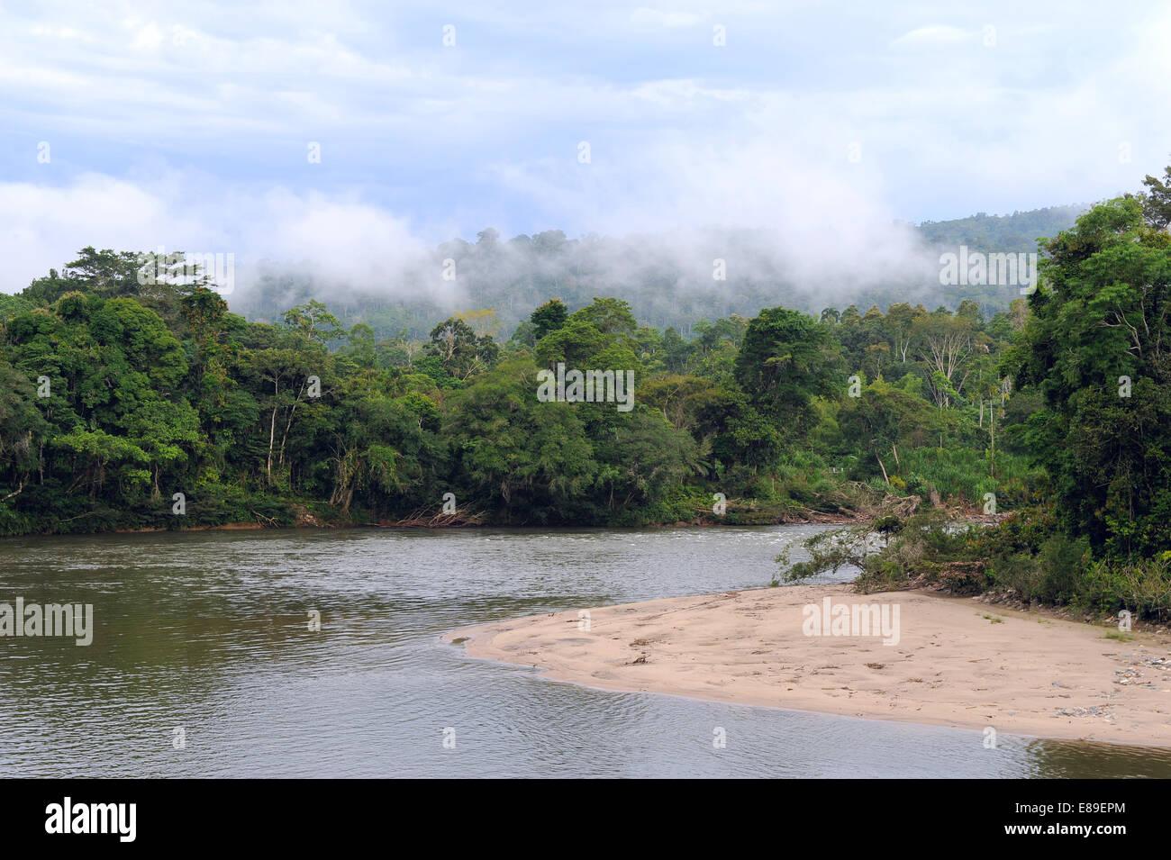 Amazon, View of the tropical rainforest, Rio Napo, Misahualli, Ecuador - Stock Image