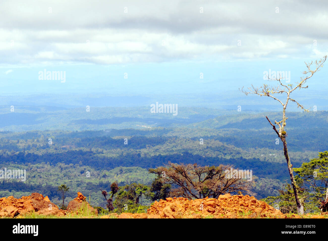 From Andes to Amazon, View of the tropical rainforest, Ecuador Stock Photo