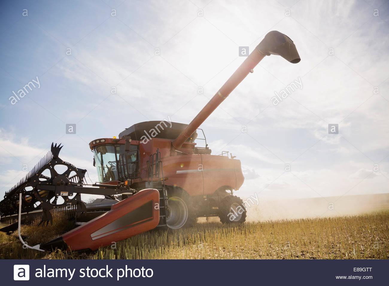 Combine harvester working in sunny crop field - Stock Image