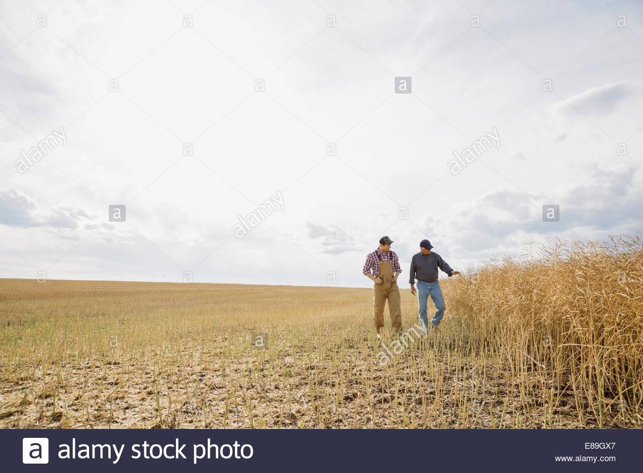 Farmers walking in sunny wheat field - Stock Image