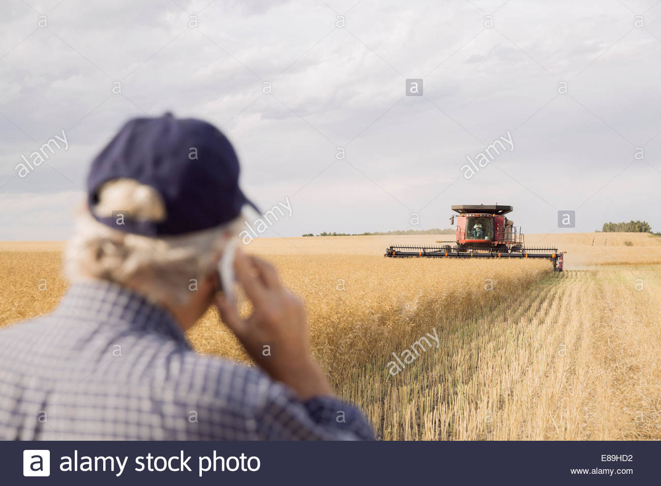 Farmer on cell phone watching combine harvester Stock Photo