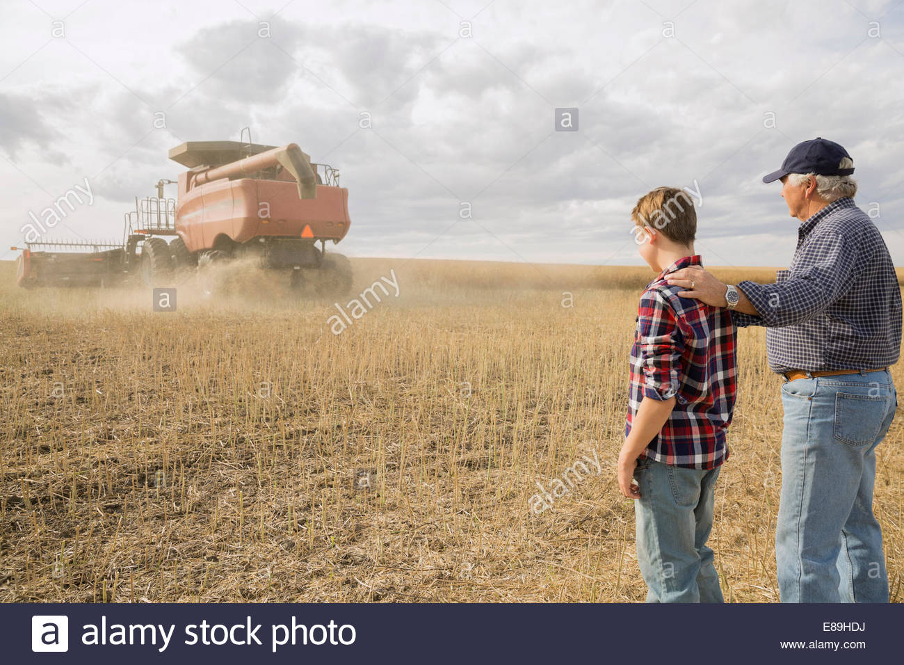 Grandfather and grandson watching combine harvester in field - Stock Image