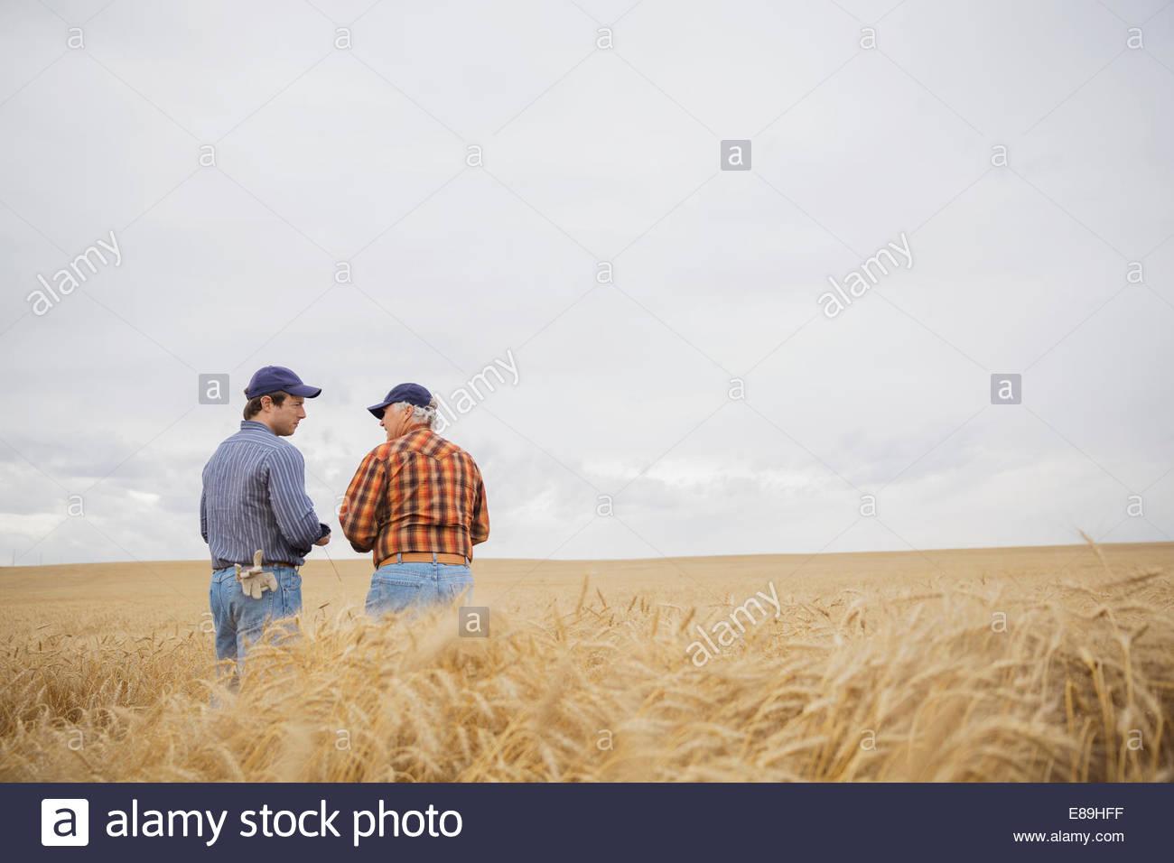 Farmers talking in wheat field - Stock Image