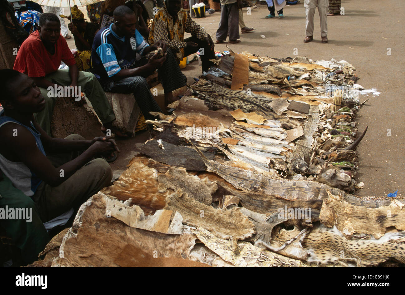 Animal skins for witchcraft on sale in the market at Bamako in Mali - Stock Image
