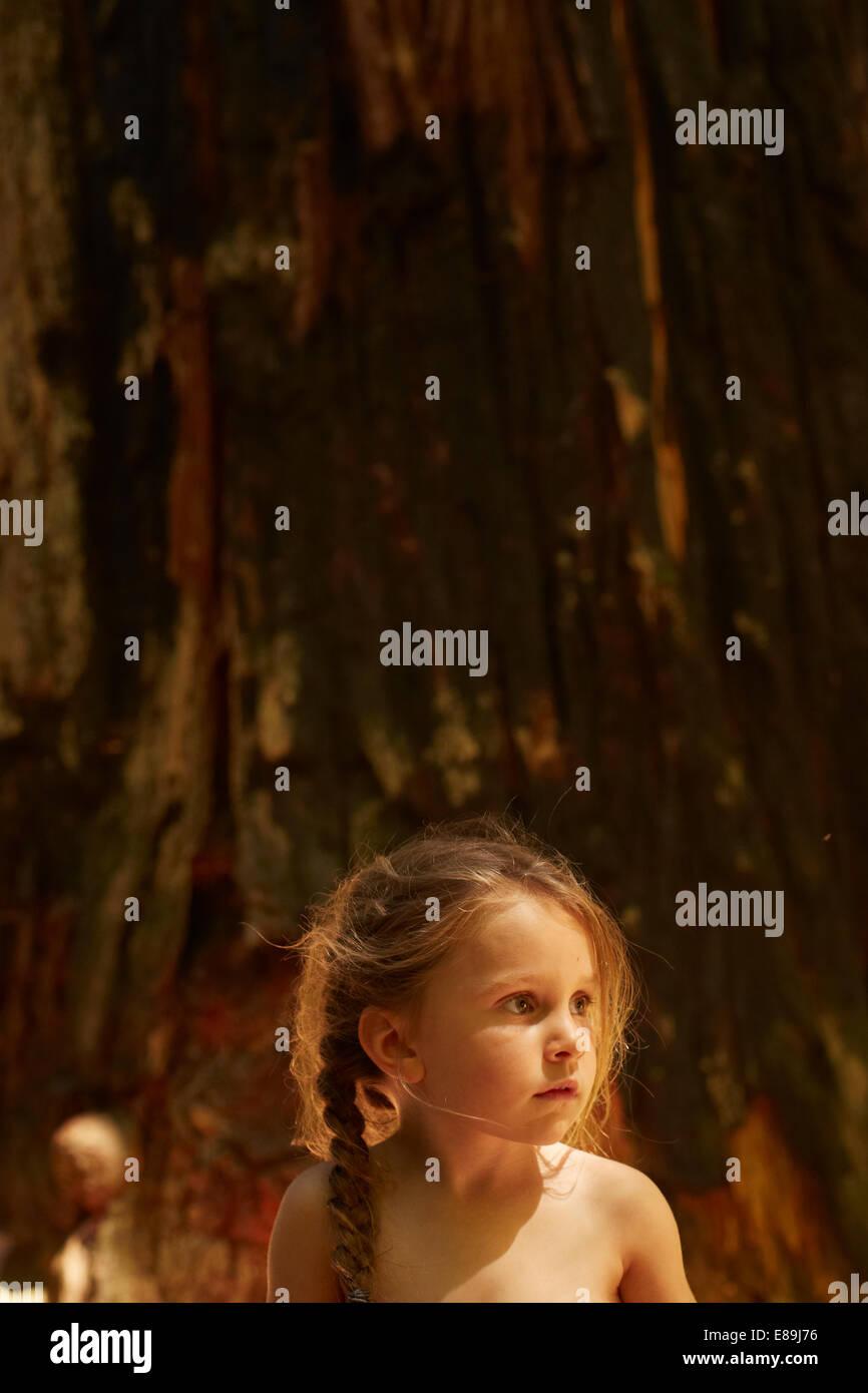 Girl sitting infront of giant redwood tree - Stock Image
