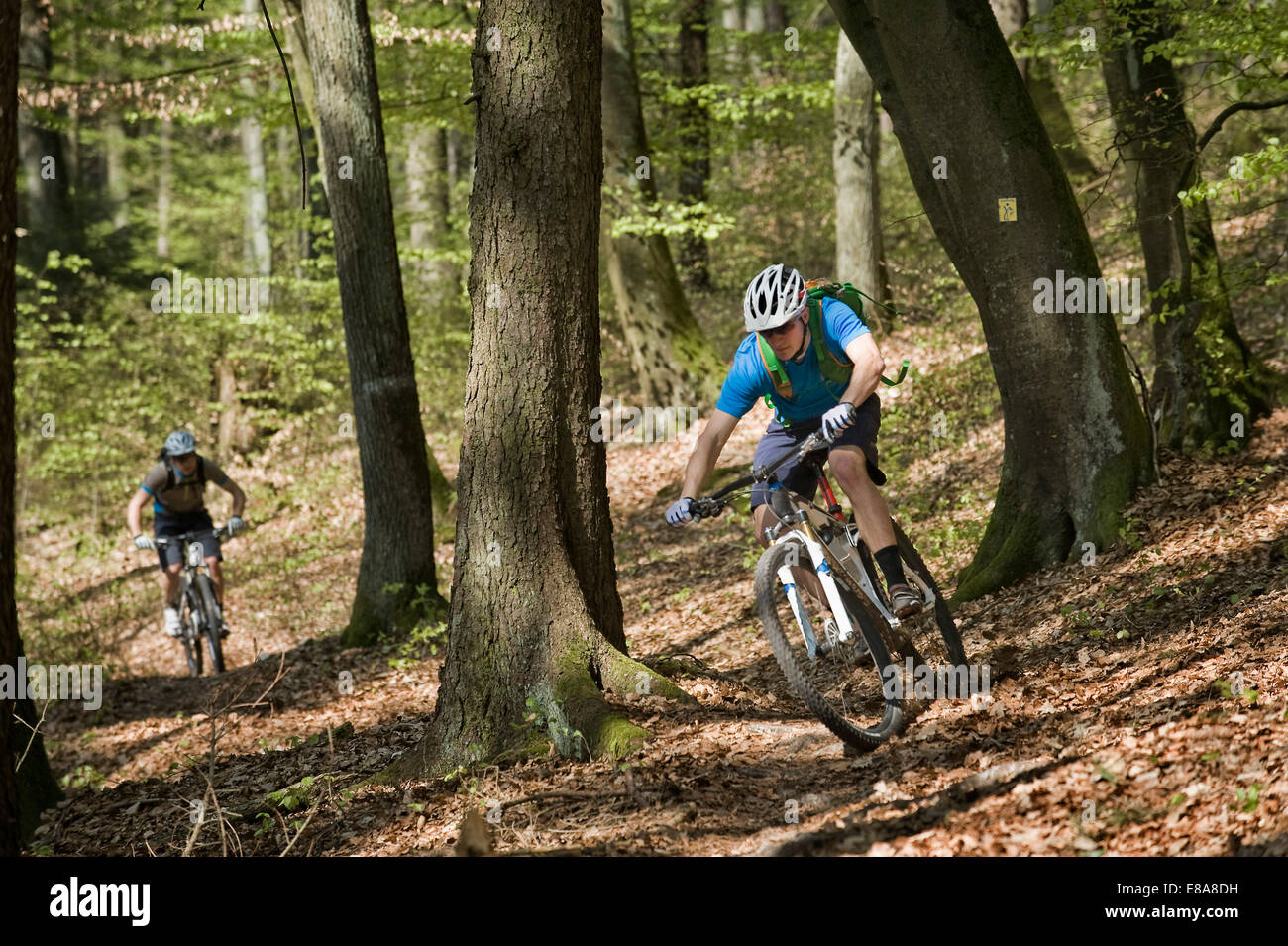 Young men mountainbiking in forest, Bavaria, Germany Stock Photo