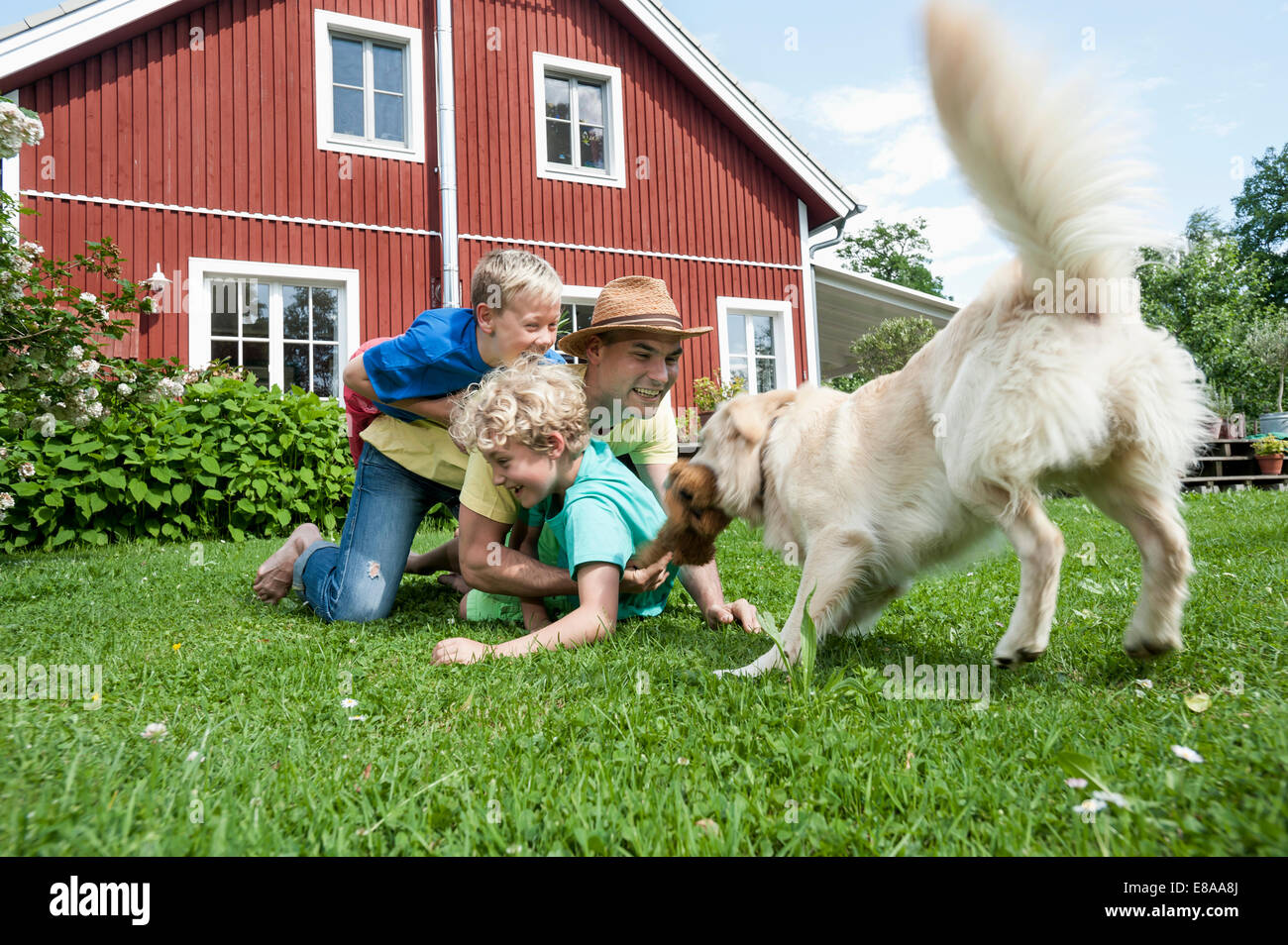 Father and sons pet dog playing on grass - Stock Image