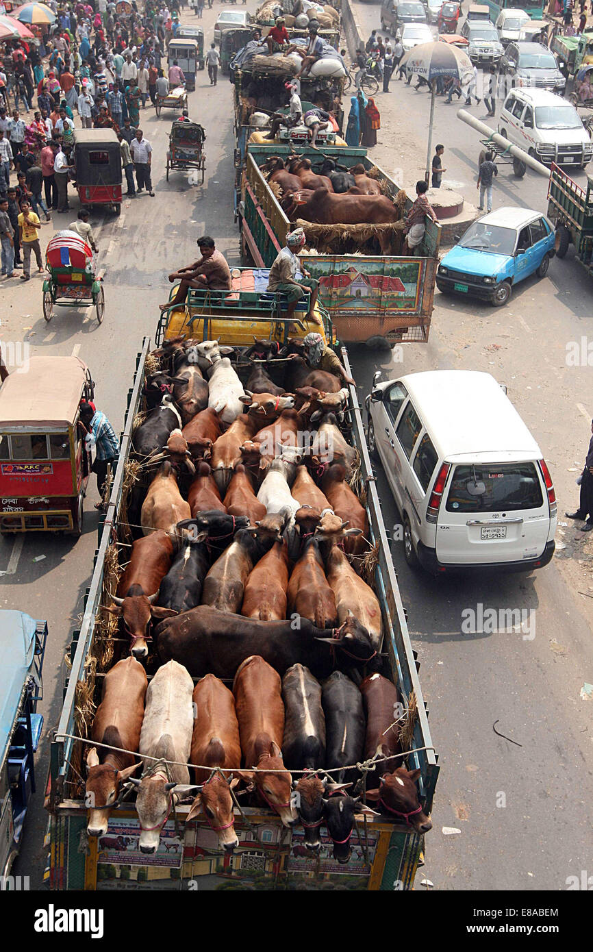 Trucks with animals meant for sacrifice during Eid at Ashulia on the Dhaka-Tangail highway heading towards the capital - Stock Image
