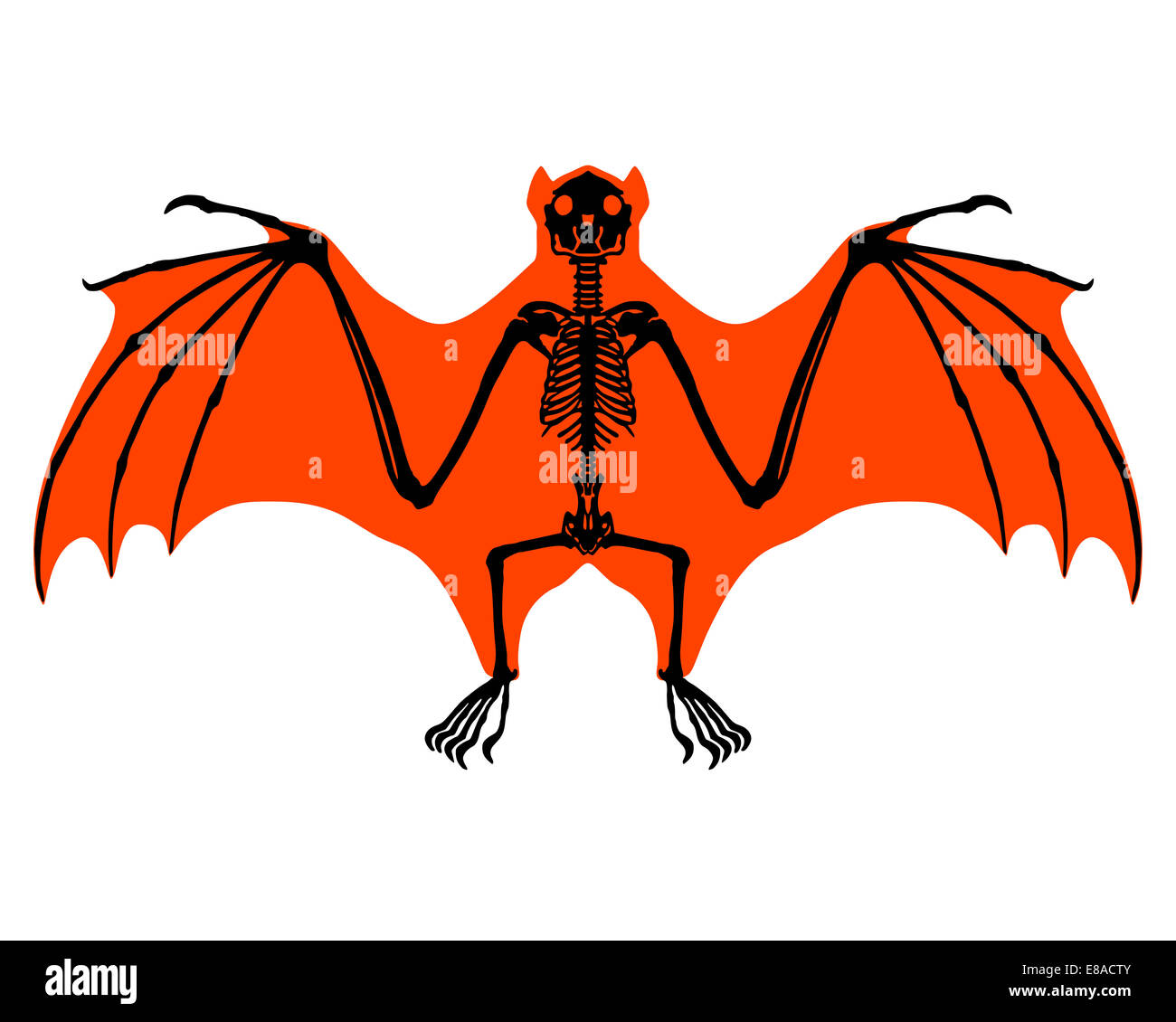 Bat Wing Anatomy Cut Out Stock Images & Pictures - Alamy