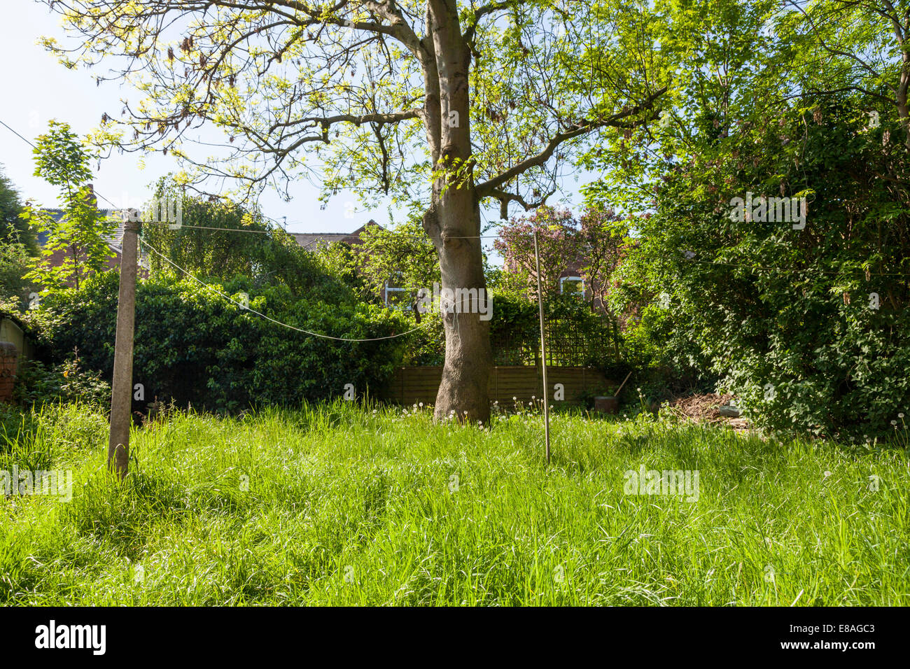 Neglected garden with a lawn of long grass and an untrimmed hedge, England, UK - Stock Image