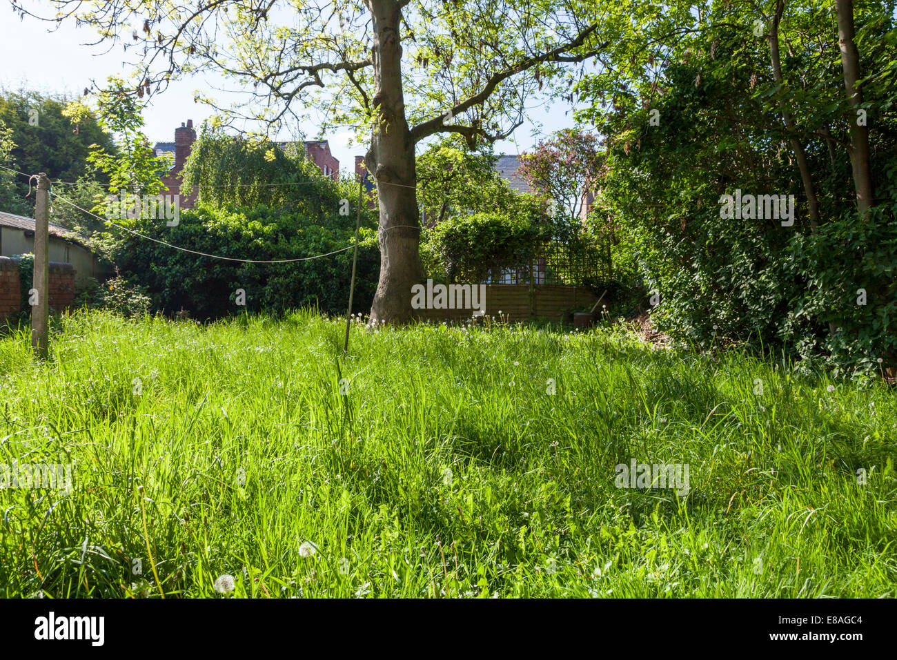 Overgrown back garden with long grass, Nottinghamshire, England, UK - Stock Image