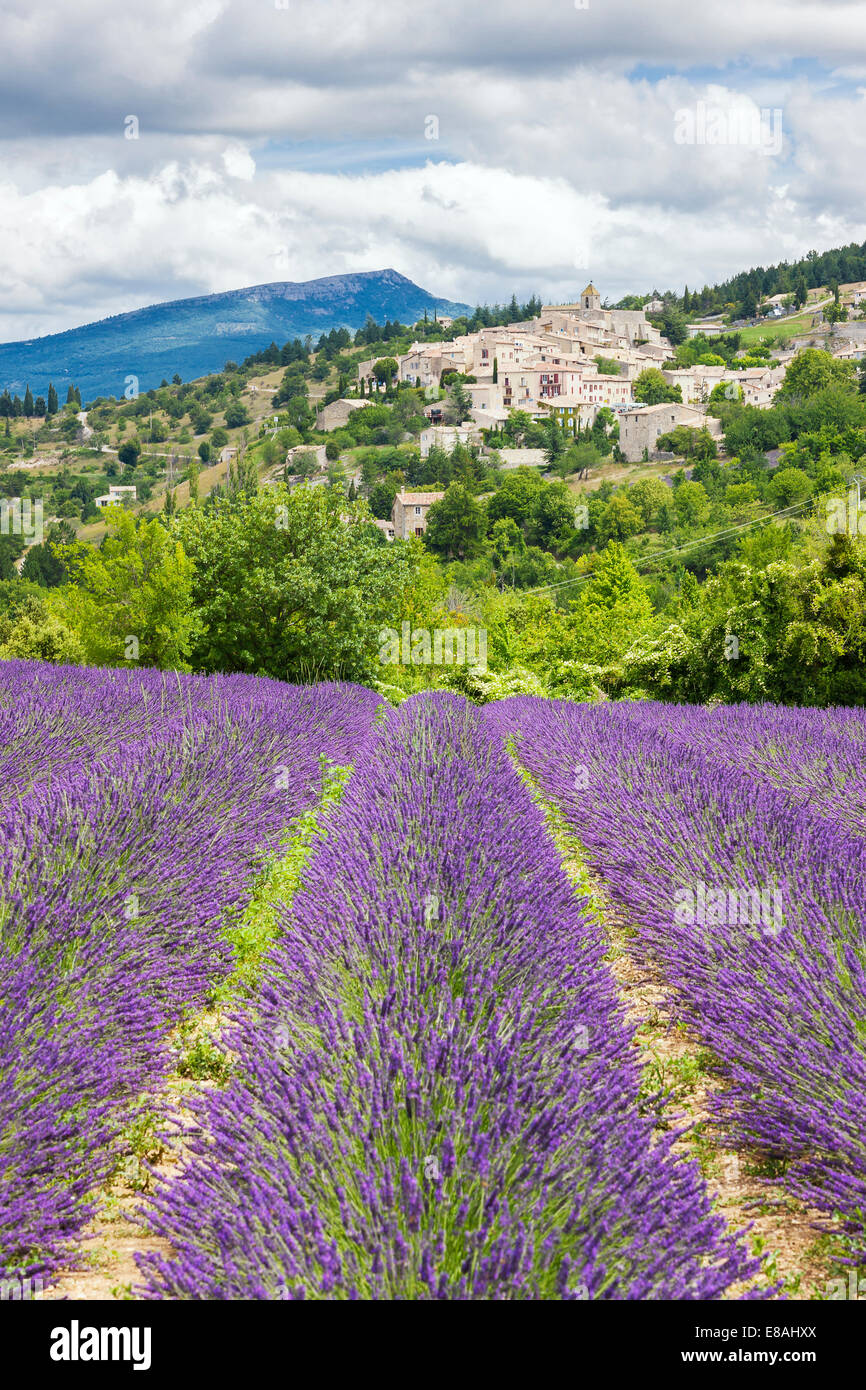 View of french landscape with lavender field and village. Stock Photo