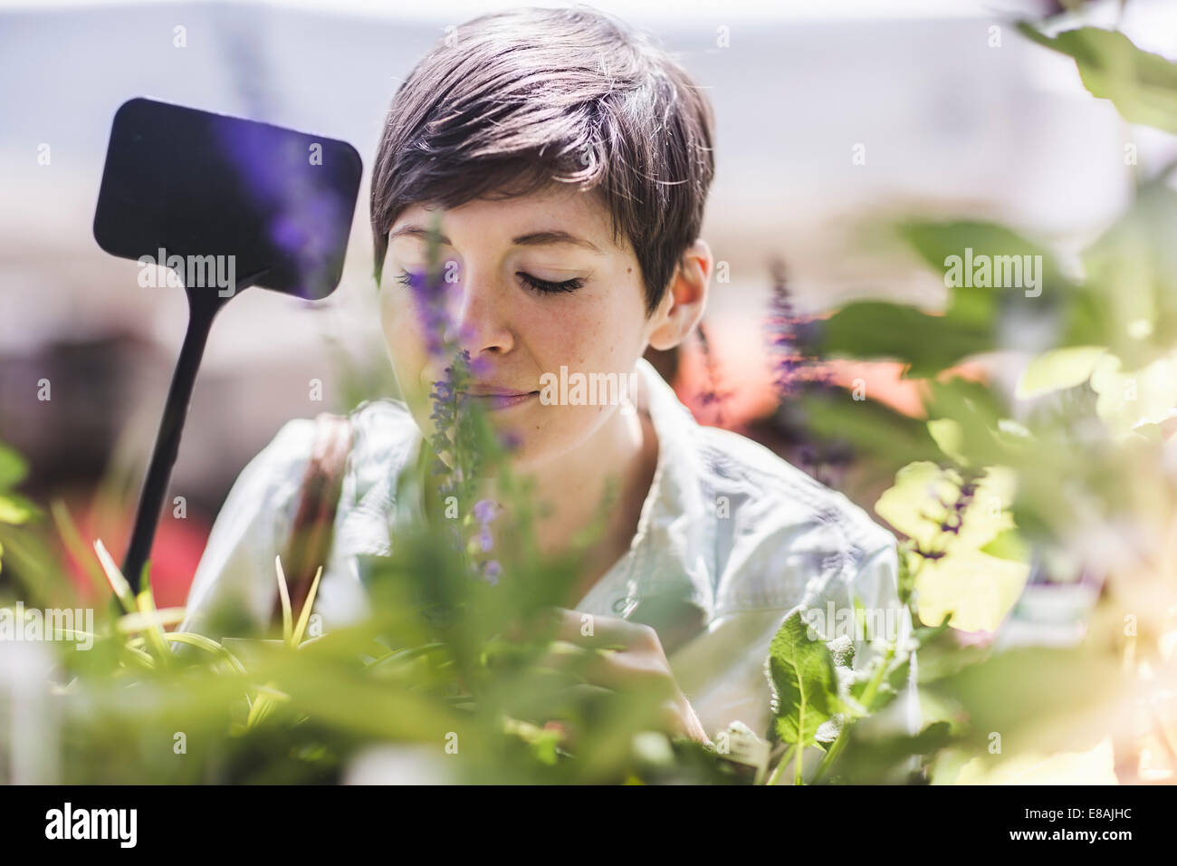 Woman shopping at plant market - Stock Image