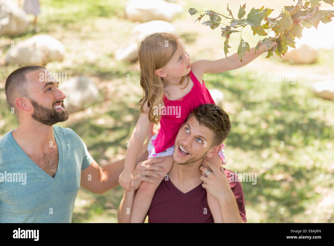 Young girl sitting on fathers shoulders reaching for tree leaf in park - Stock Image