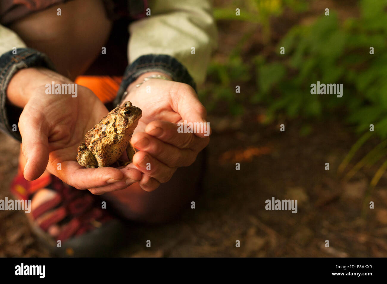 Close up of hands holding a toad Stock Photo