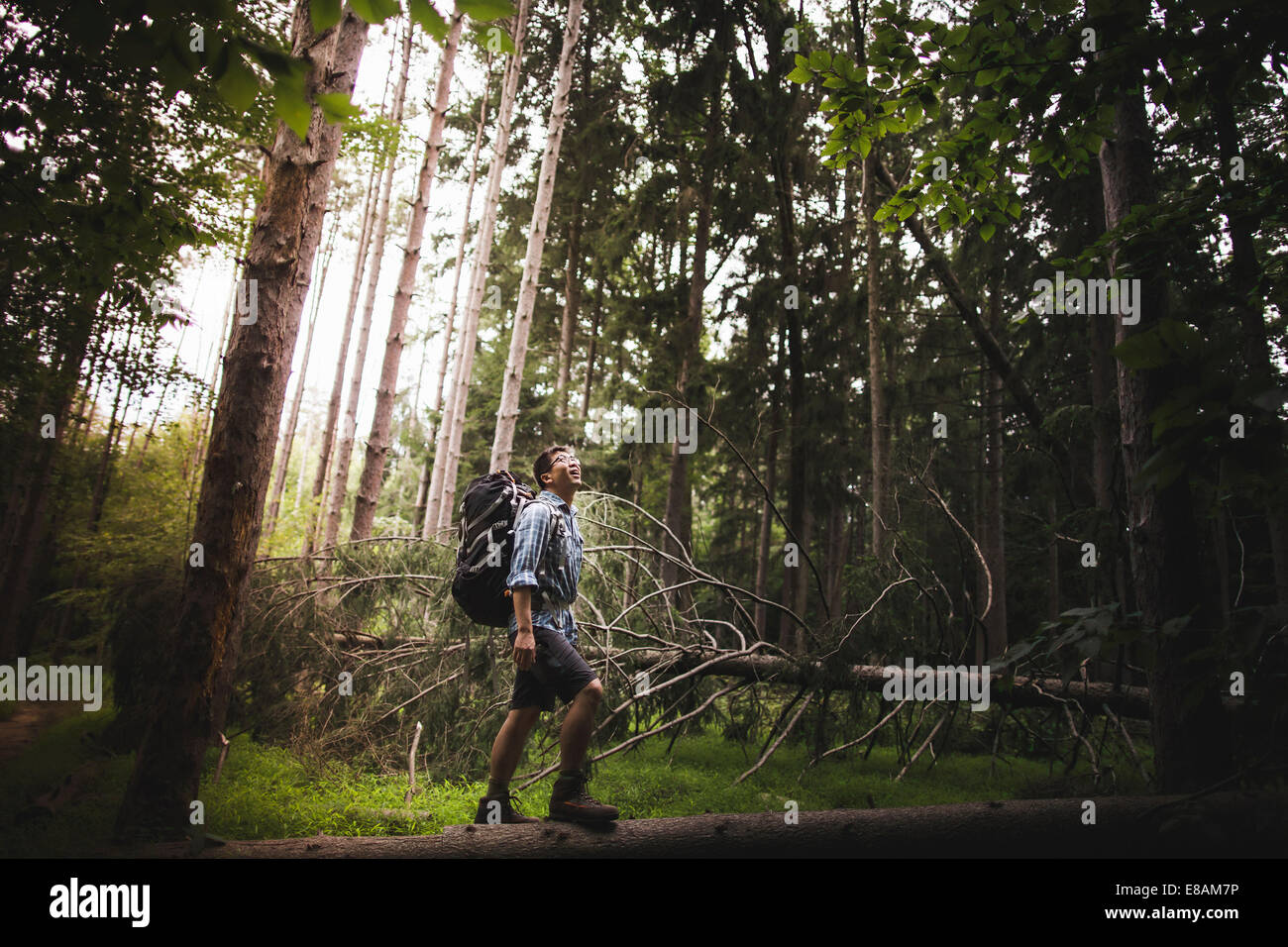 Mature man hiking in forest - Stock Image