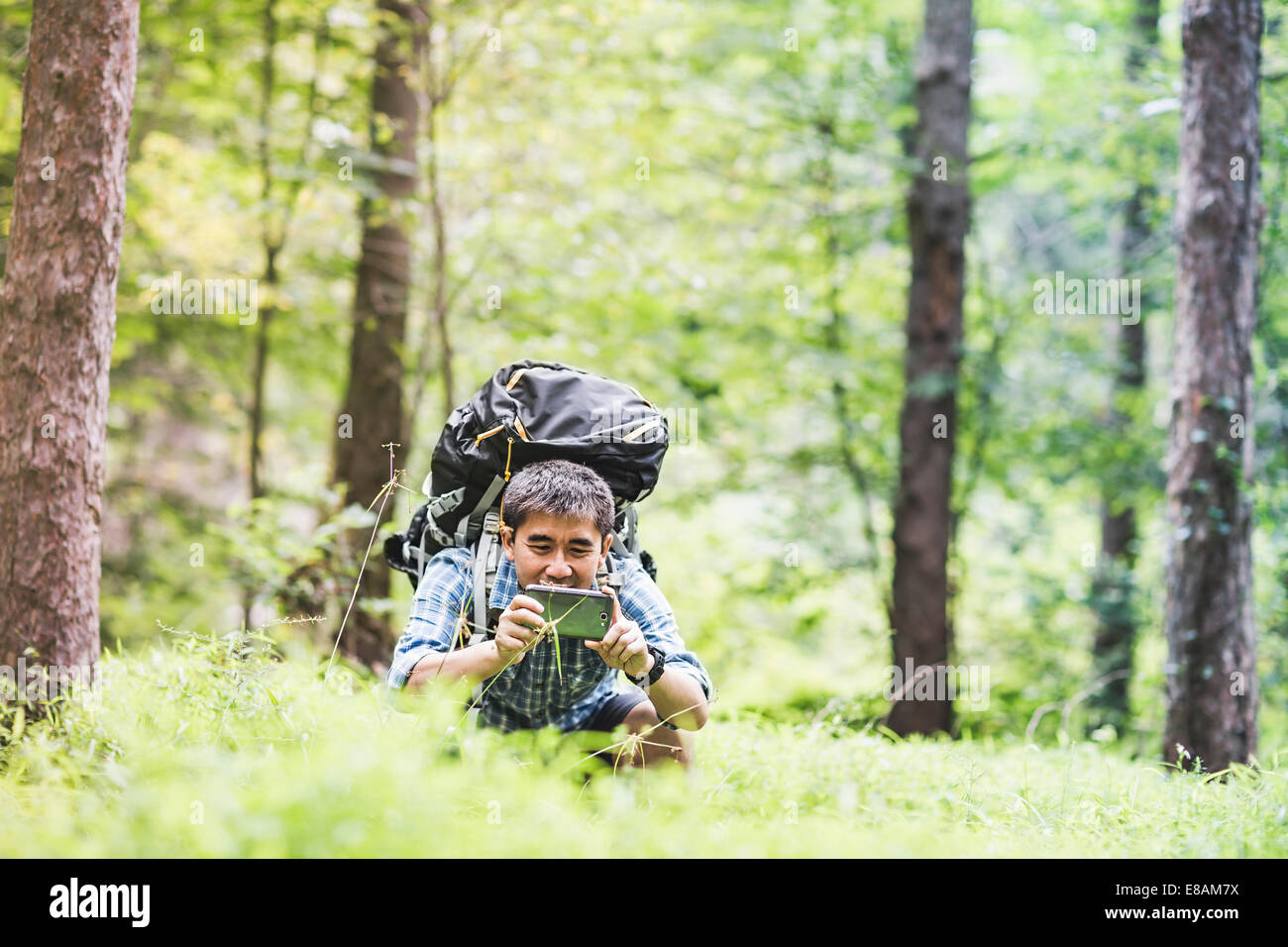 Hiker taking photo on camera phone in forest - Stock Image
