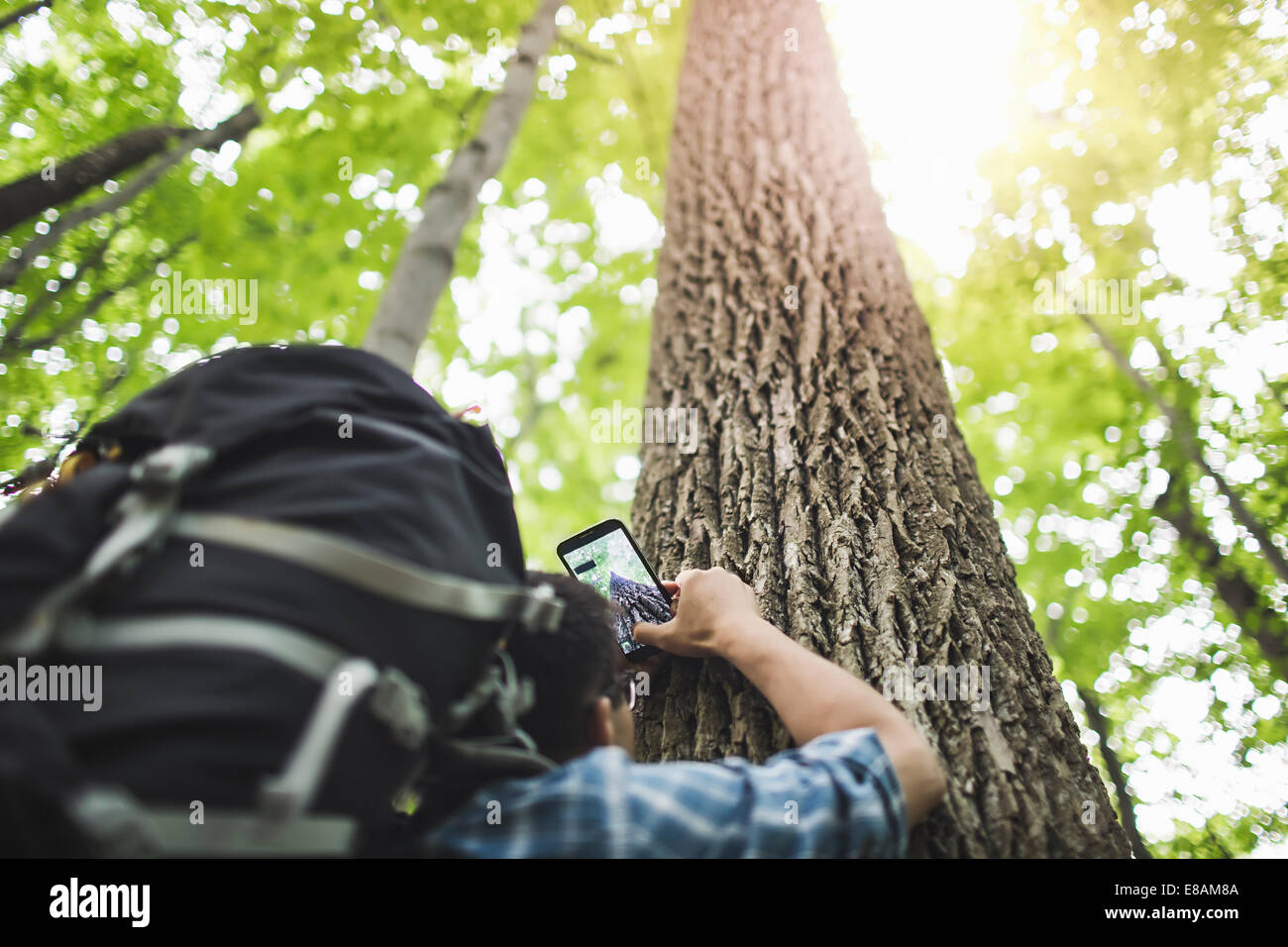 Man taking photo of tree trunk with camera phone, low angle Stock Photo