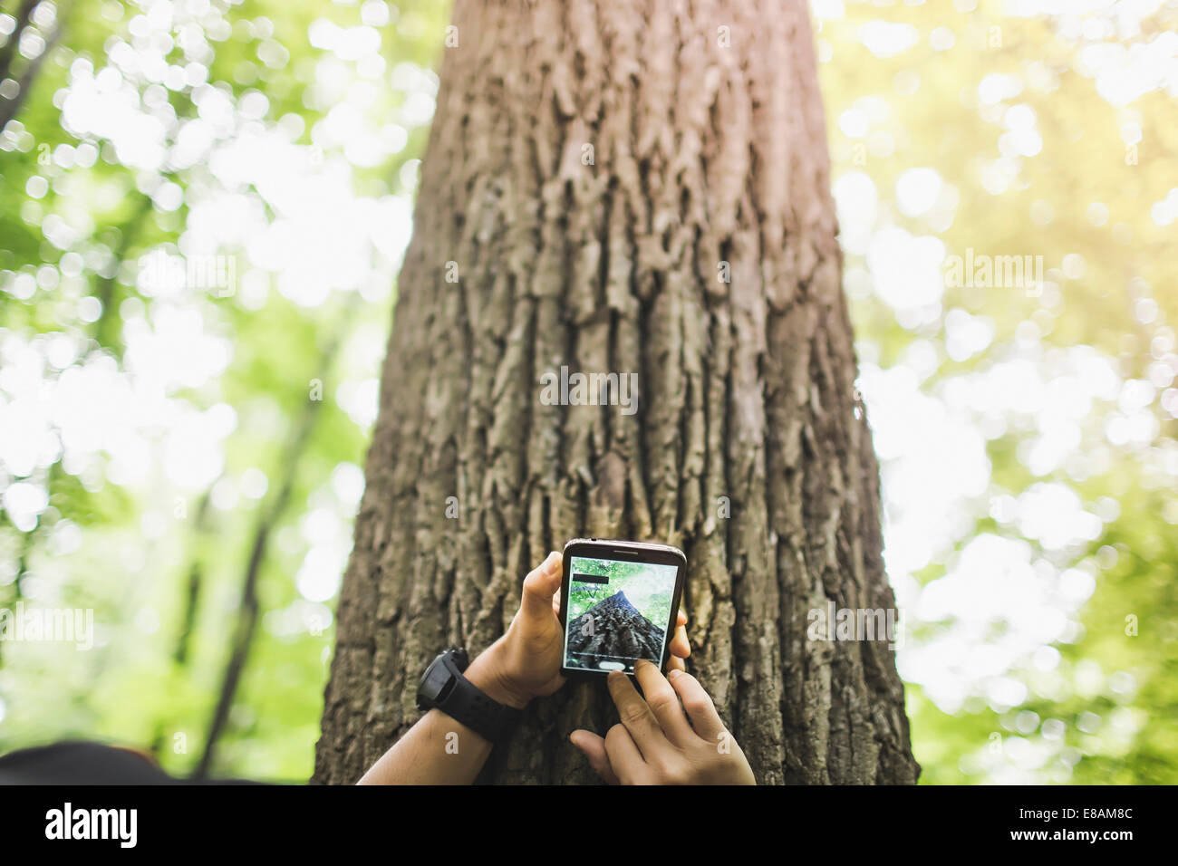 Person taking photo of tree trunk with camera phone - Stock Image