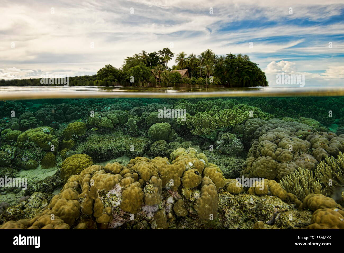 Coral below waterline, Uepi Island, New Britain, Solomon Islands - Stock Image