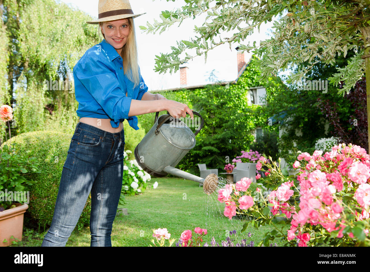 Mid adult woman watering rose bush in garden - Stock Image