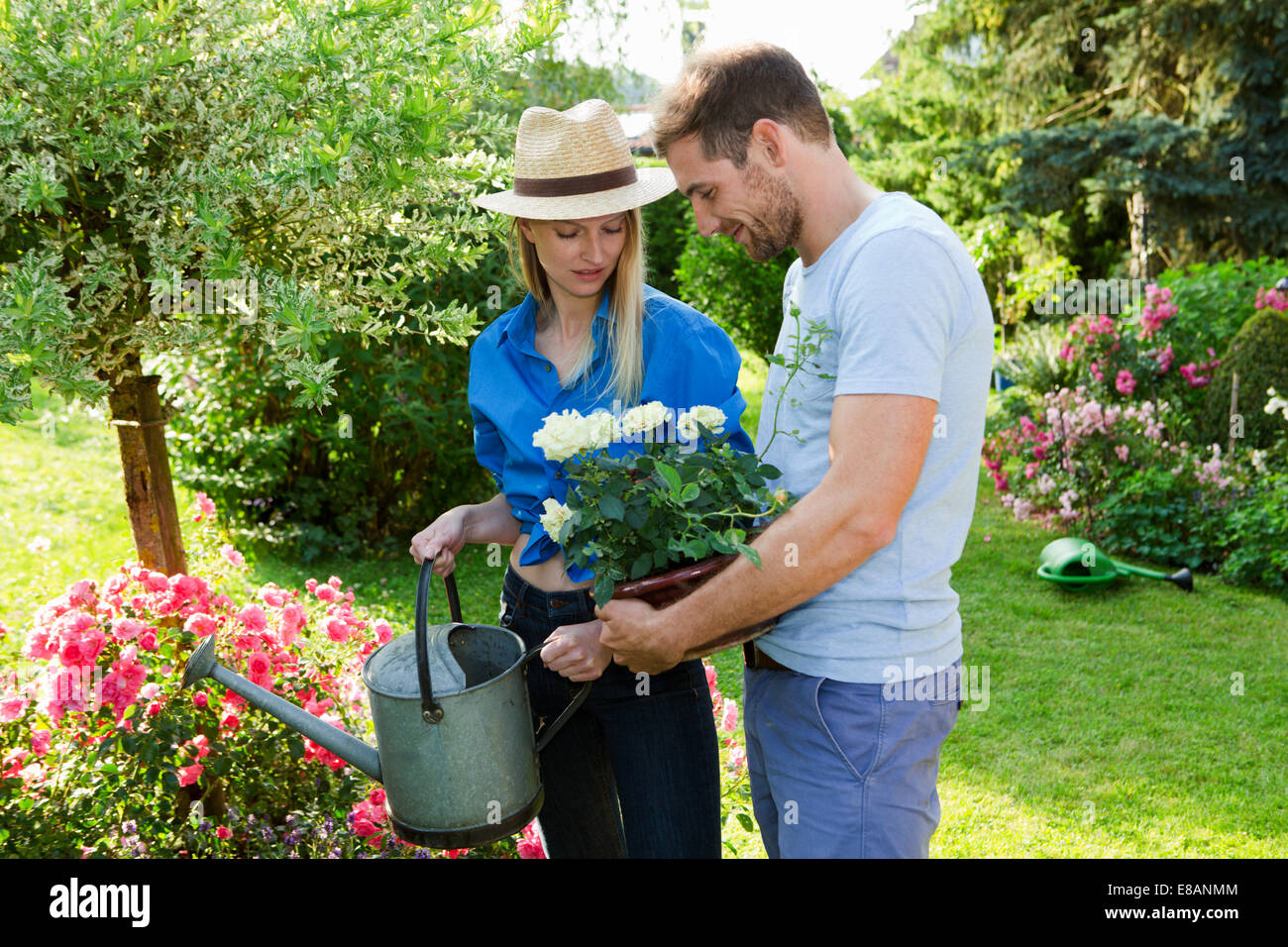 Mid adult couple watering rose bush in garden - Stock Image