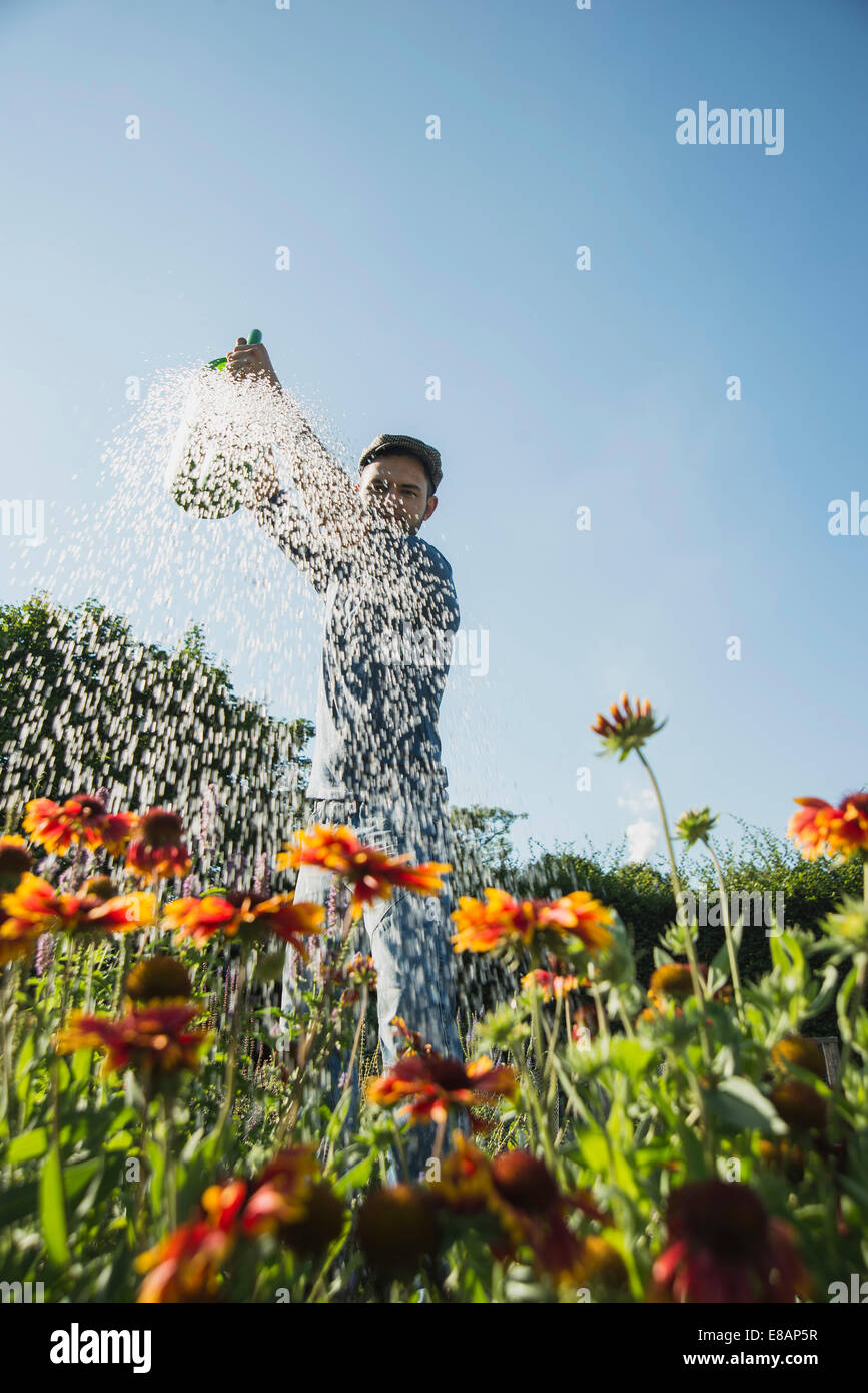 Gardener watering flowers - Stock Image