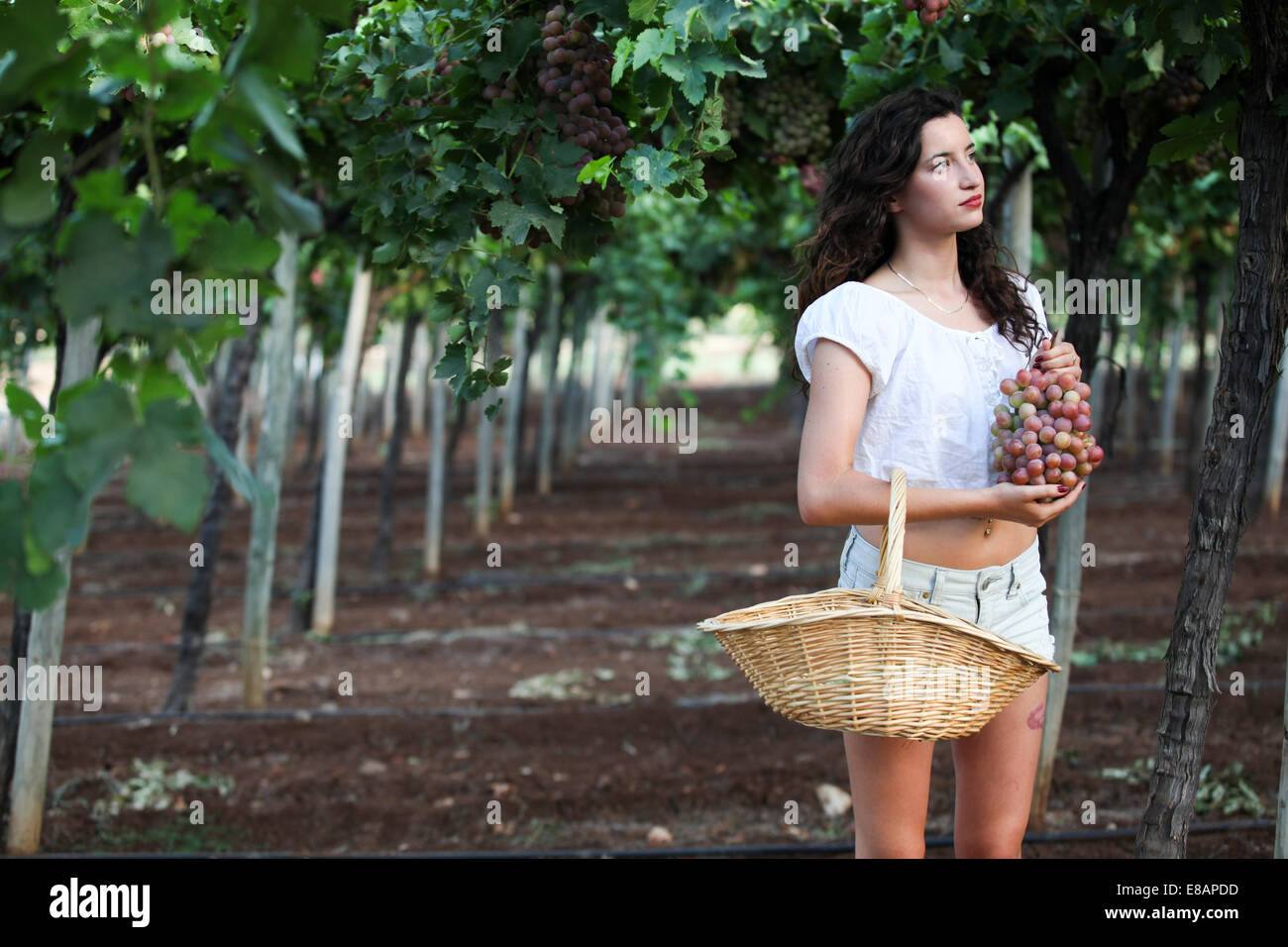 Young woman standing among vines, holding grapes - Stock Image