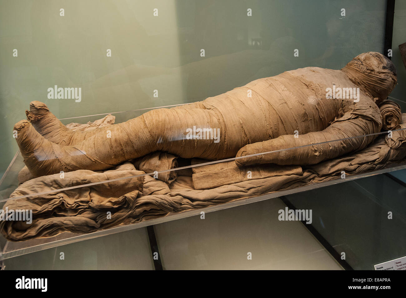 Italy Piedmont Turin Egyptian Museum Mummy - Stock Image