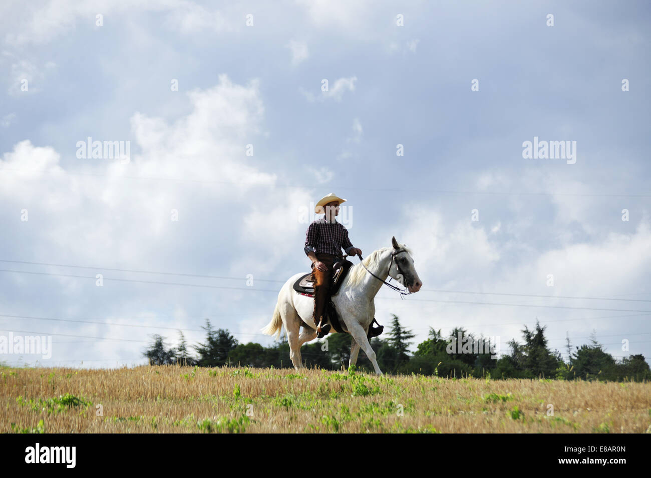 Young man in cowboy gear trotting on horse in field - Stock Image