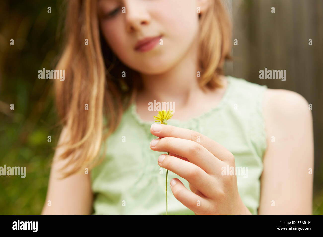 Cropped shot of girl with holding dandelion flower - Stock Image