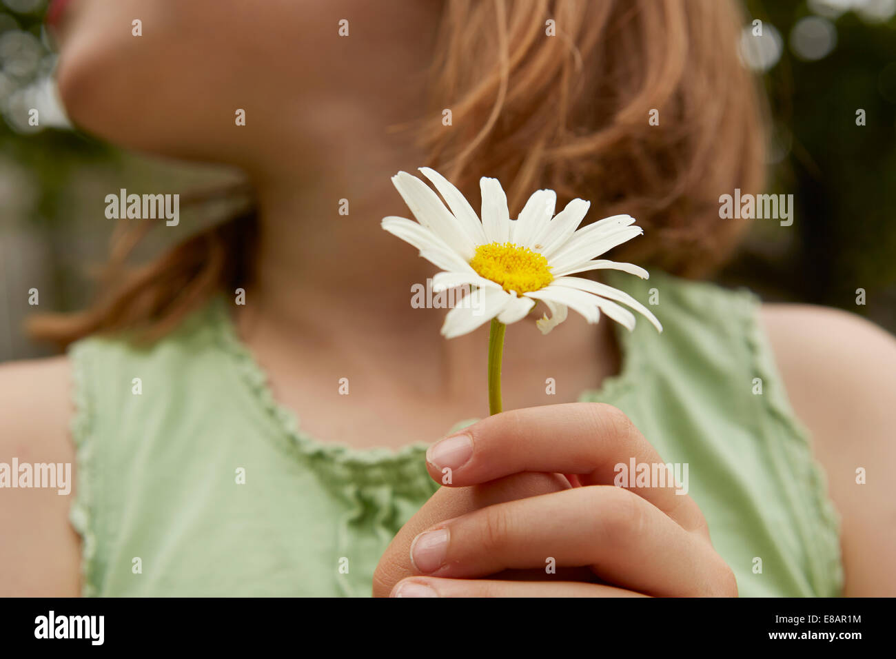 Cropped image of girl holding daisy flower - Stock Image