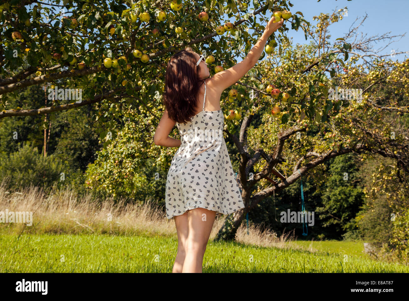 Young woman picking apple form tree - Stock Image