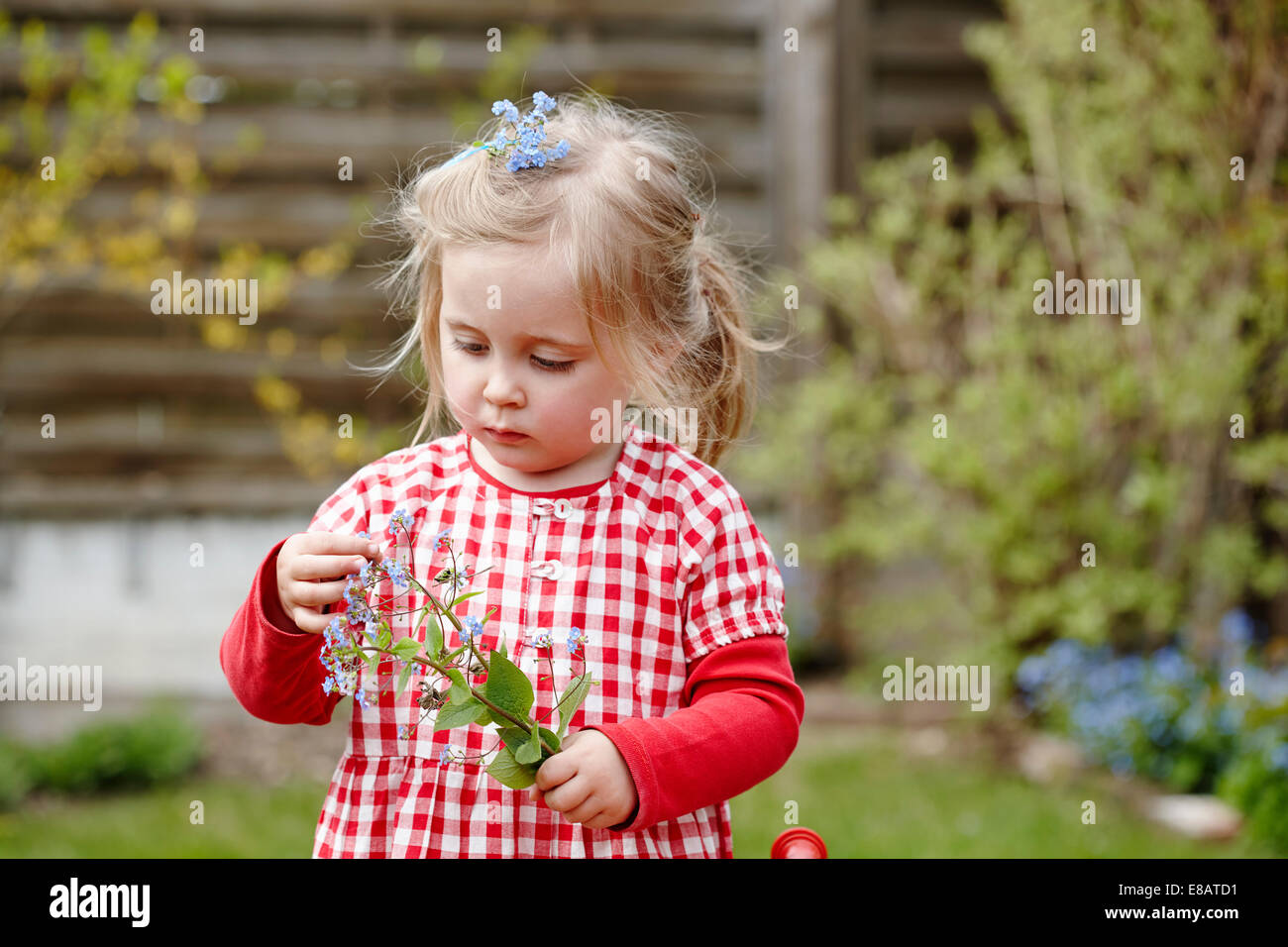Young girl wearing gingham dress holding flowers - Stock Image