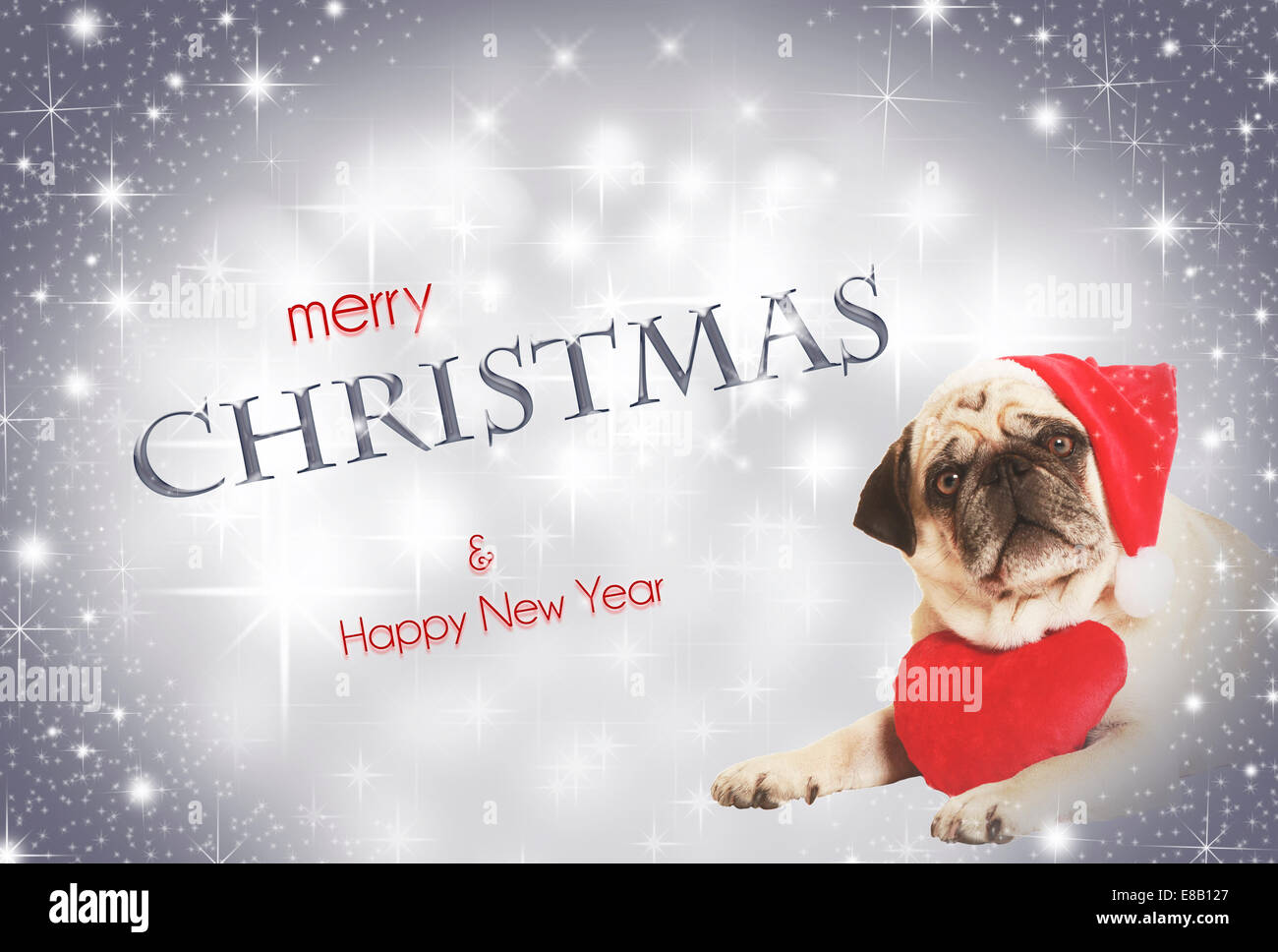 pug in Santa costume lying, exempted, white background, dressed as Santa Claus, wearing a plush heart around his - Stock Image
