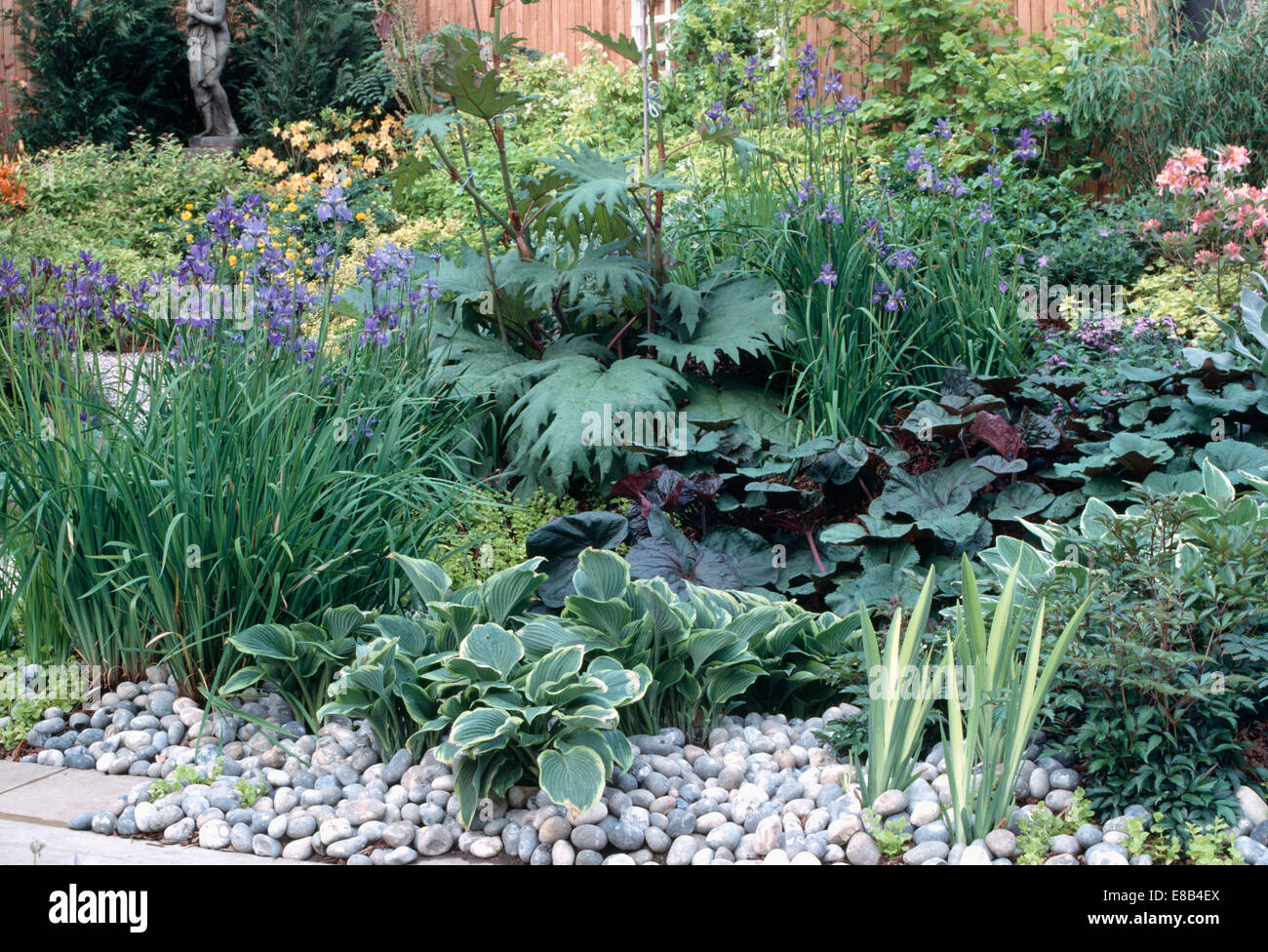 Blue Iris And Hosta Mulched With Pebbles In Well Stocked