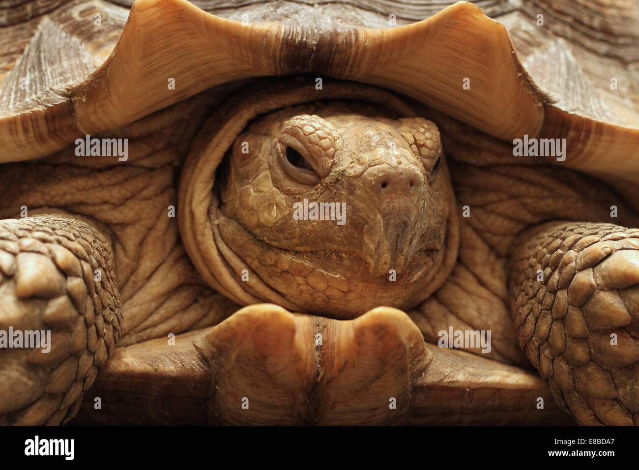 Tortoise And Hare Stock Photos Amp Tortoise And Hare Stock