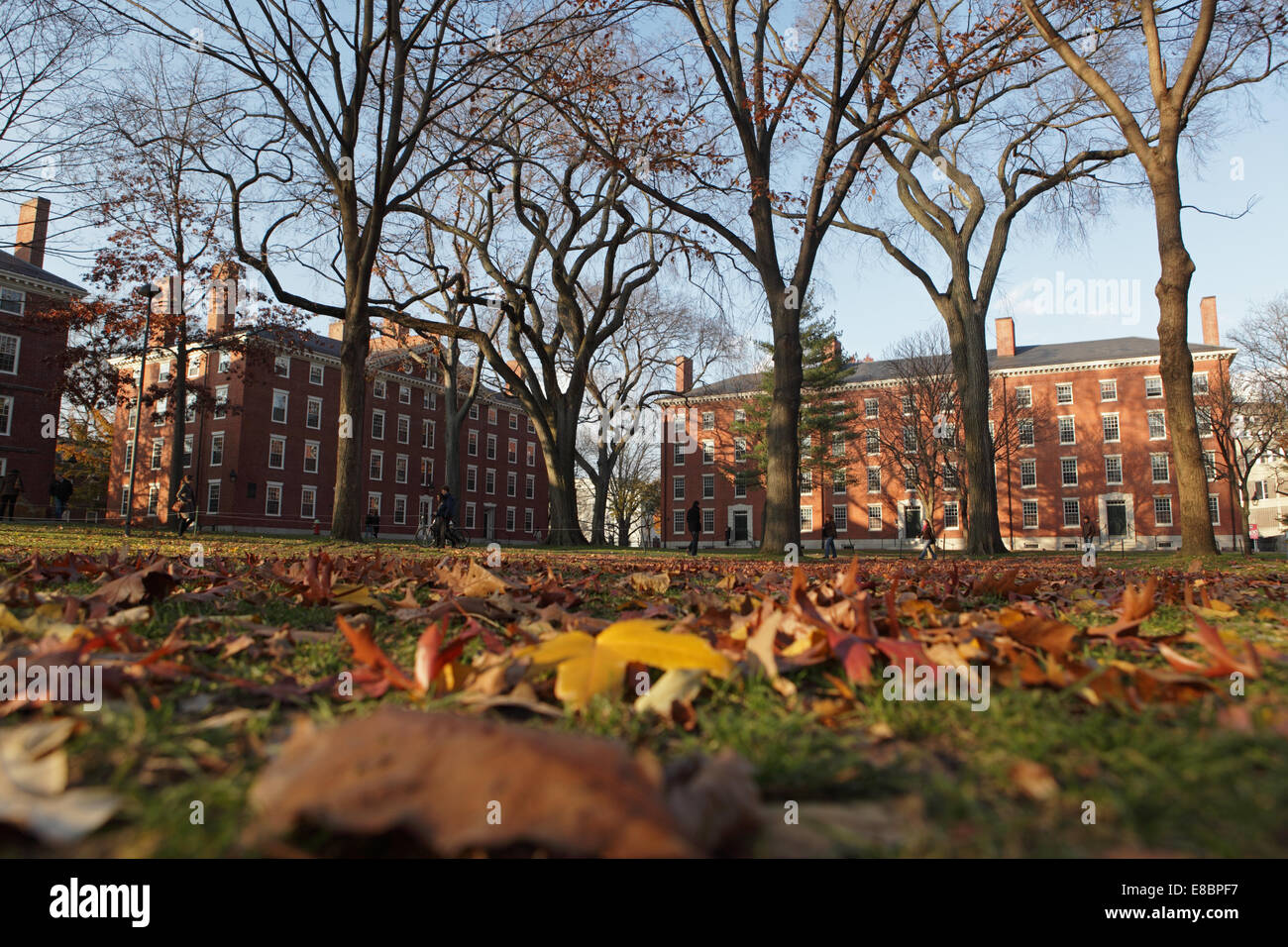 View of Harvard University campus - Stock Image