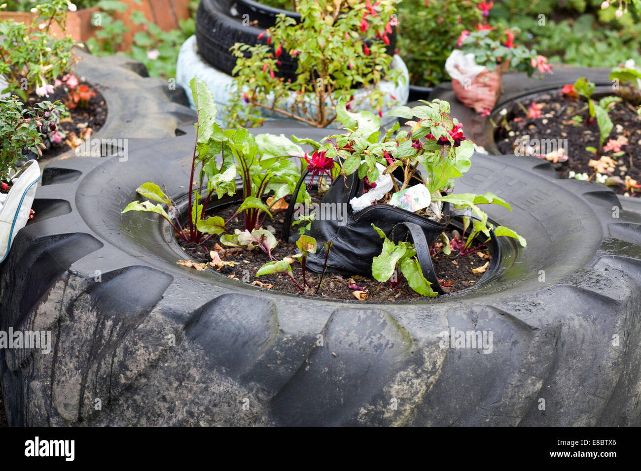 Tractor tire with Plants growing in the middle 'Inventive Gardens' - Stock Image