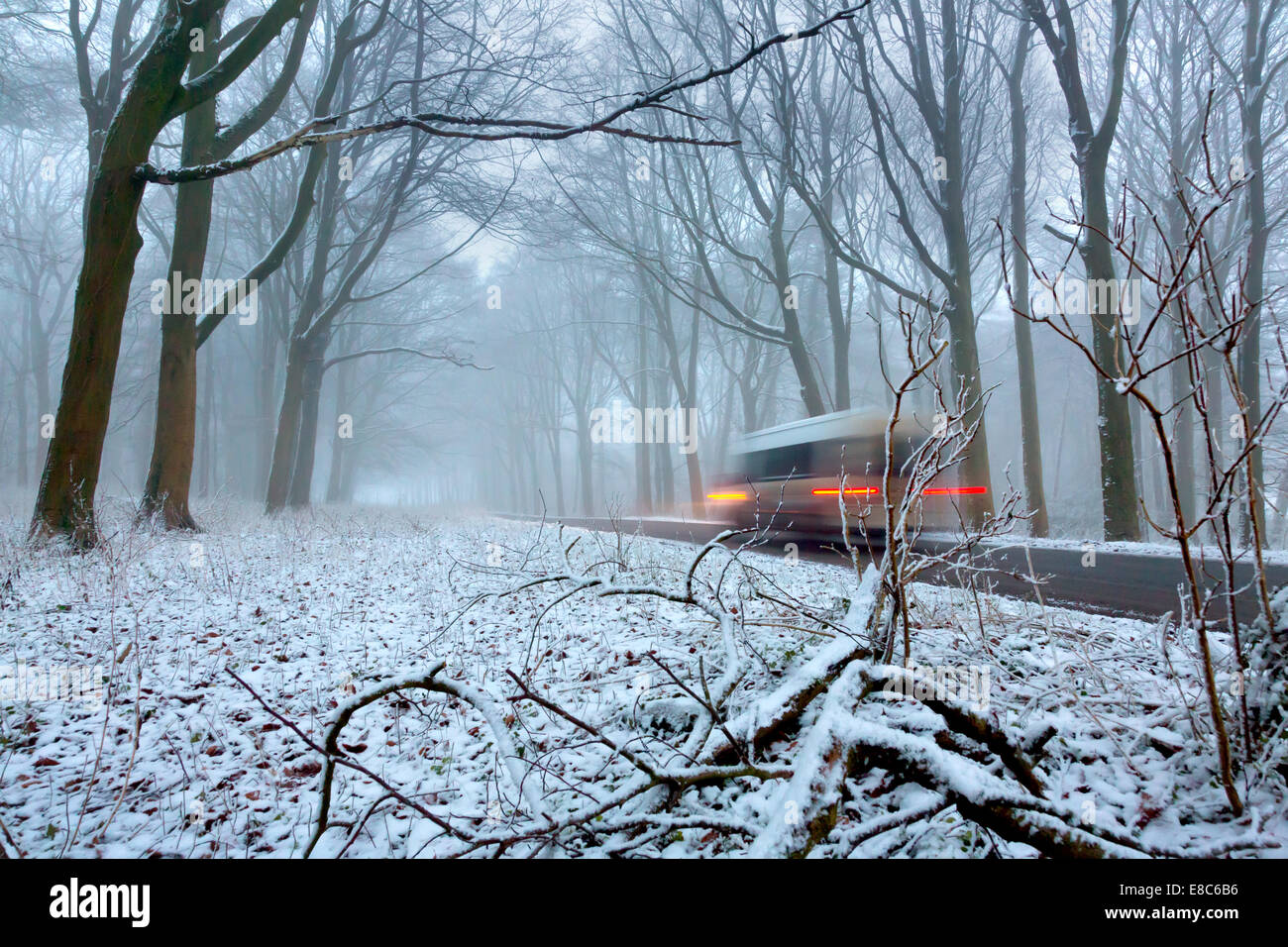 A minibus is traveling at speed at dawn through a wood in winter, north Yorkshire, England. - Stock Image