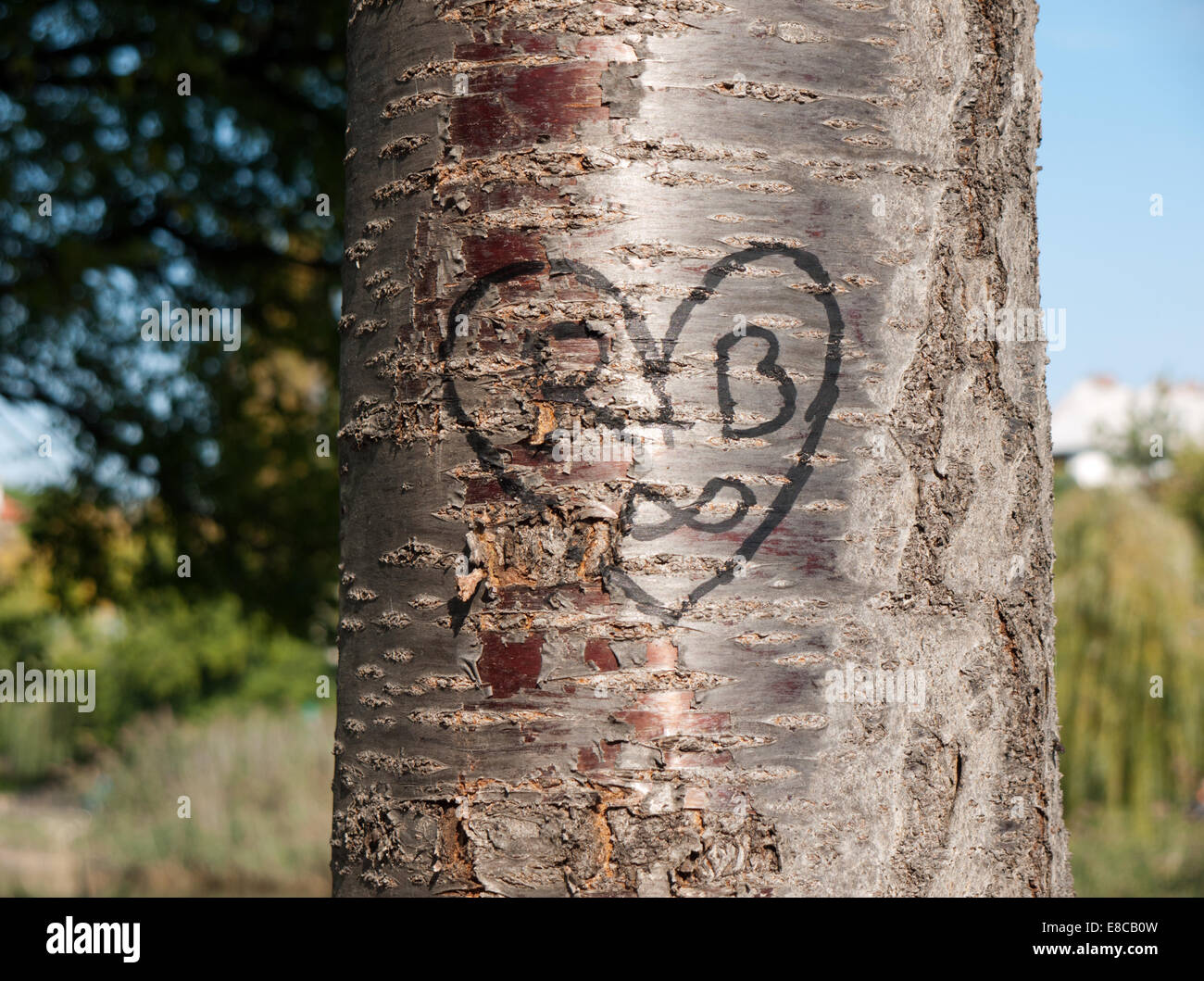 Initials carved tree stock photos