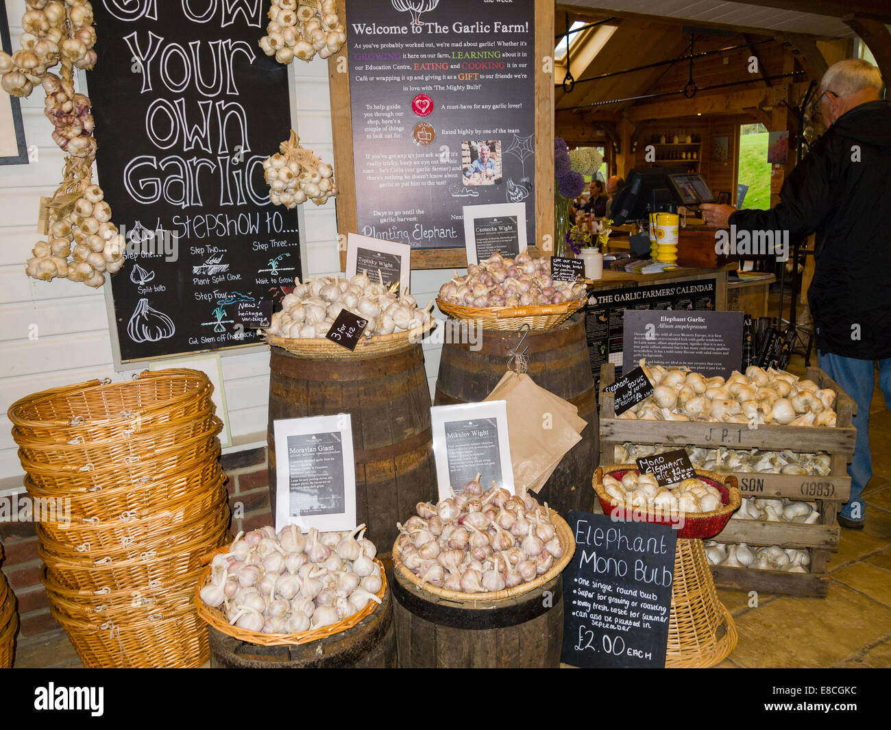 Bulbs of various types of garlic, Garlic Farm Shop, Isle of Wight, England, UK - Stock Image