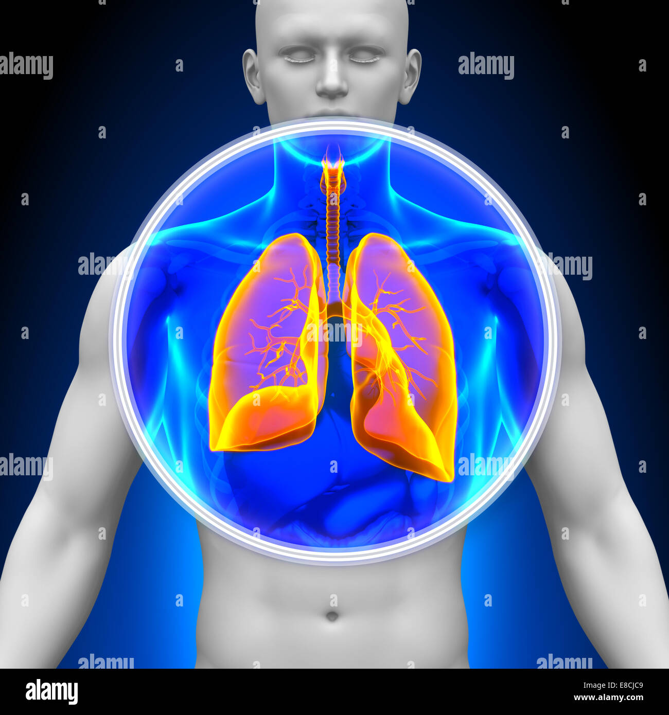 Medical X-Ray Scan - Lungs - Stock Image