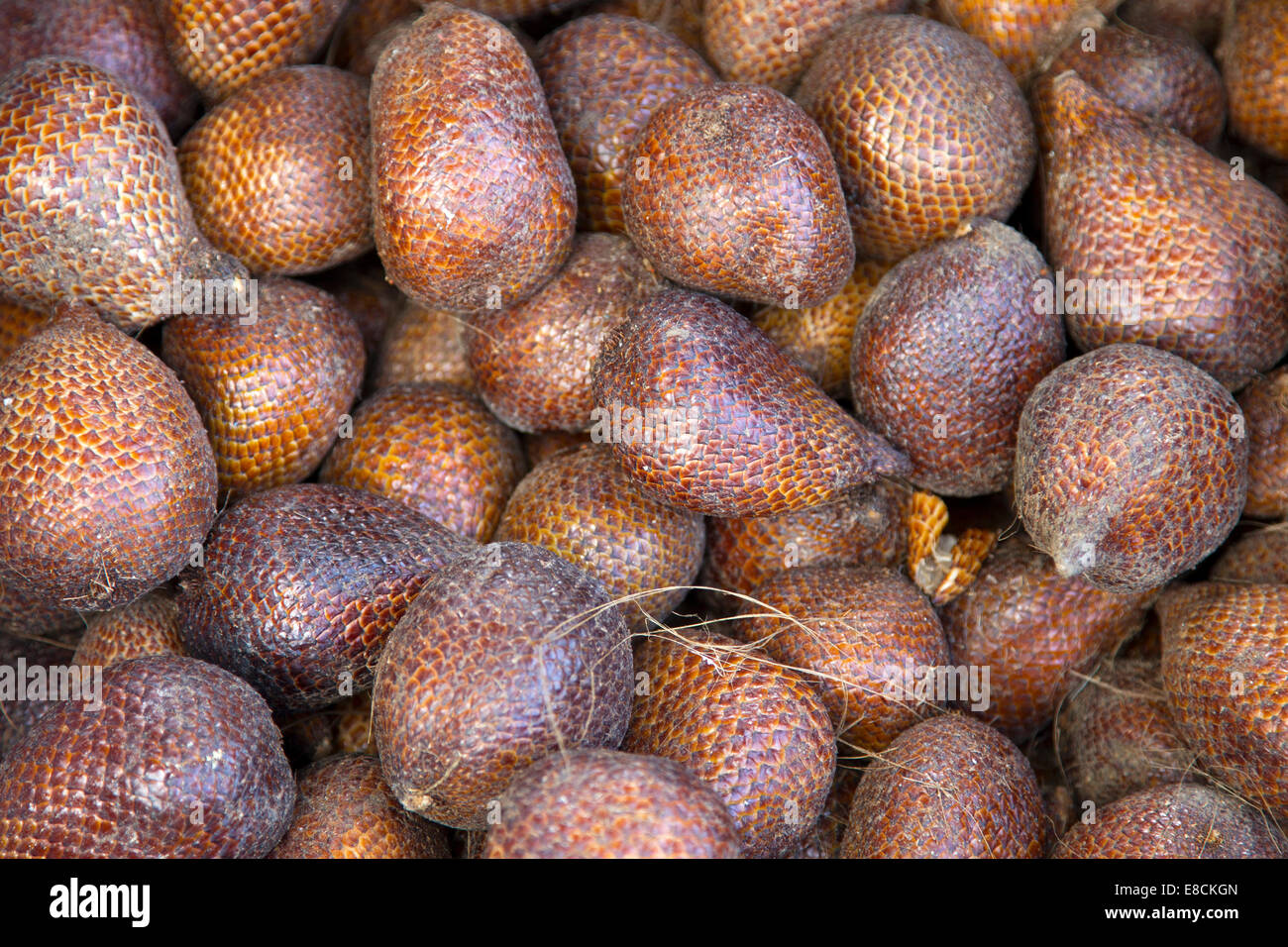 Salak or snake fruit - Stock Image