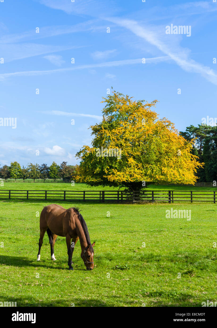 Irish National Stud: Horse At The Irish National Stud Breeding Facility, Tully