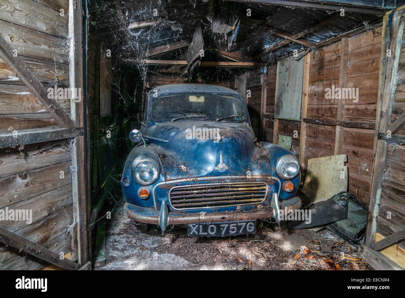 A old Morris Minor stored in a shed covered in cobwebs and spider webs. - Stock Image