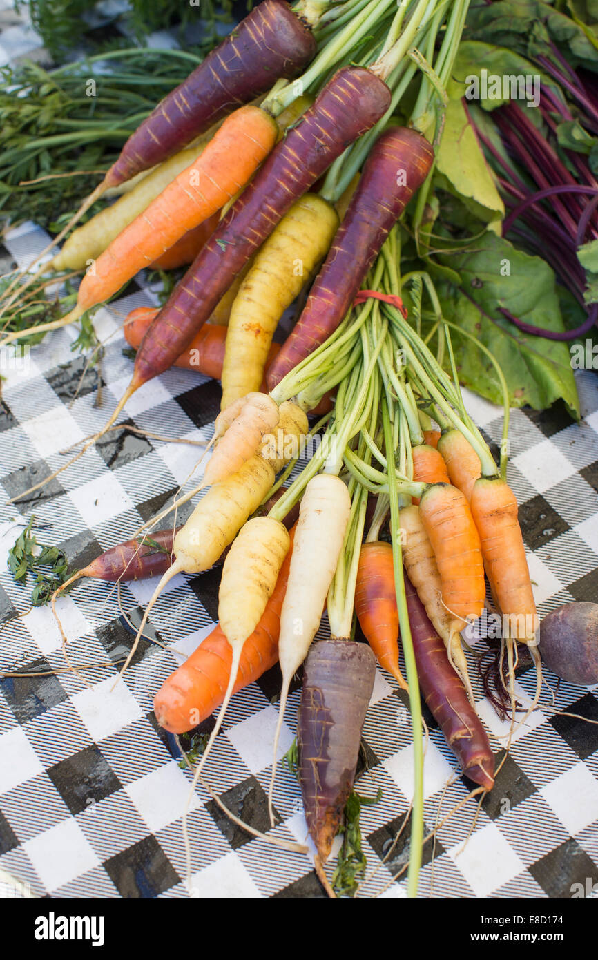 Multicolored carrots at Sebastopol farmer's market, Sonoma County, California - Stock Image
